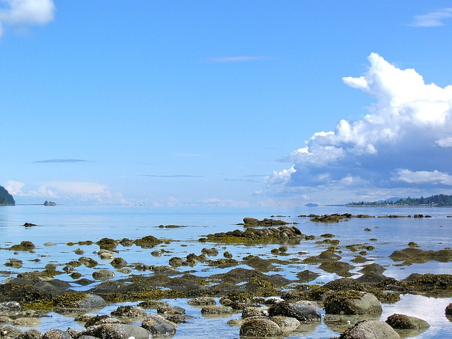 Salish Sea Sechelt BC