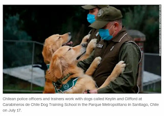 Chile fancies coronavirus sniffer police dogs to help reopen public spaces this fall