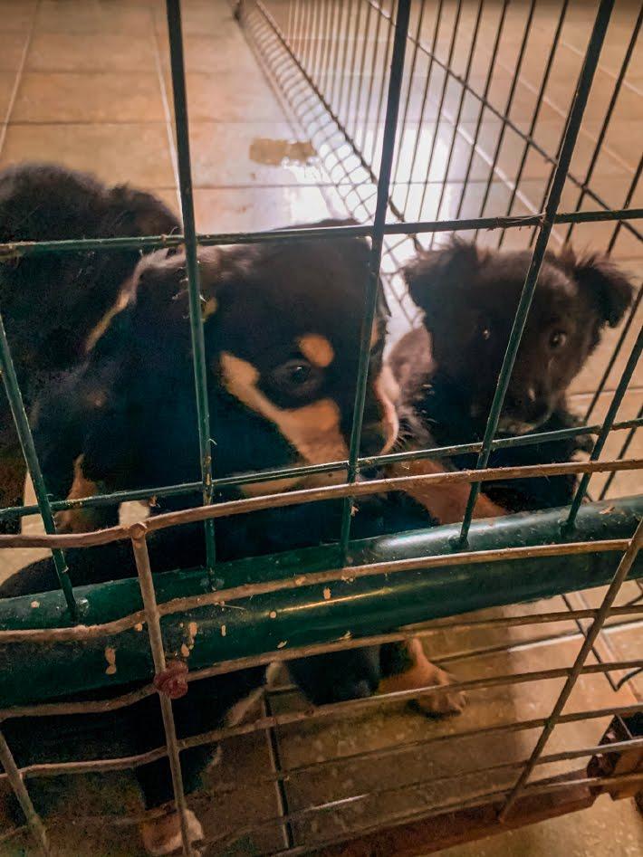 Pieski do adopcji we Wrocławiu
