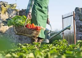Organik Tarım İşletmeciliği nedir