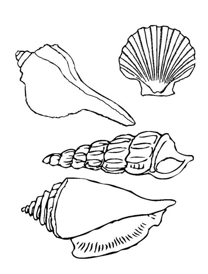los dibujos para colorear  dibujos de conchas de mar para