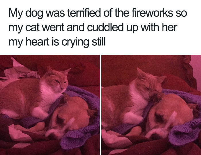 30 Adorable Dog Memes That Will Make Your Day