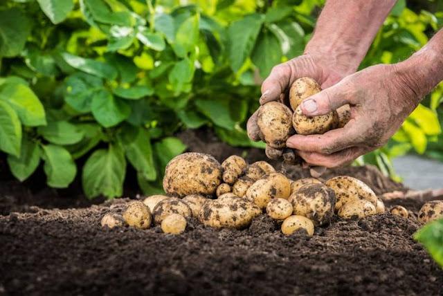 Κραυγή αγωνίας προς την κυβέρνηση: Στηρίξτε τους αγρότες να καλλιεργήσουν γιατί θα πεινάσουμε