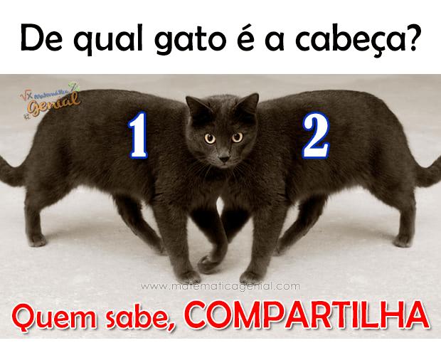Teste: De qual gato é a cabeça?