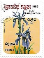 Selo Iris delavayi