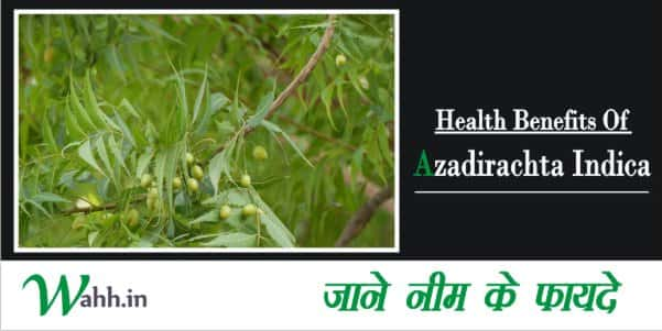 Health-Benefits-Of-Azadirachta-Indica