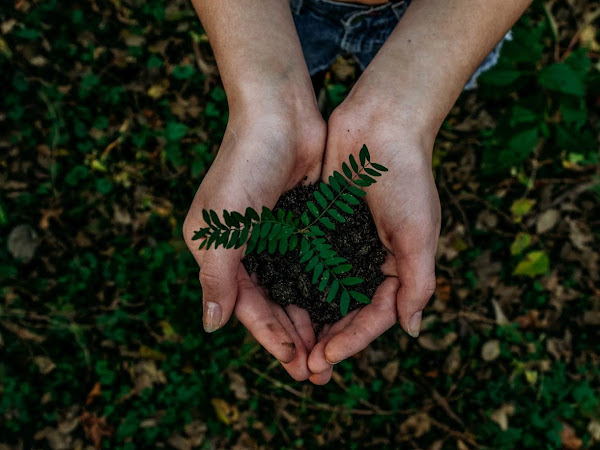 5 Eco Friendly Changes You Can Make Right Now