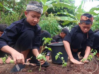 Siswa SDN sedang menanam cabai di sekolah
