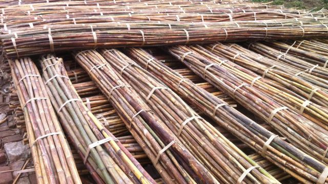 natural rattan cane reed