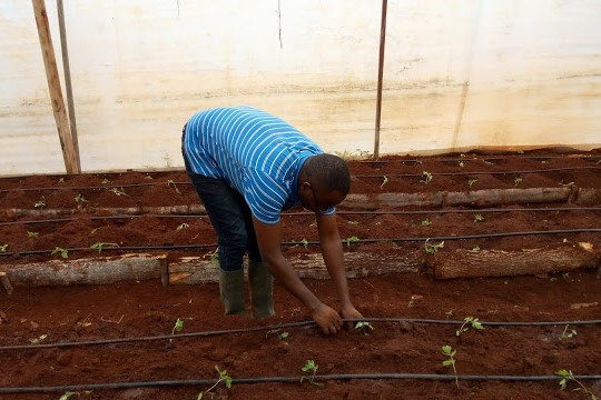 Farming is for the committed and dedicated individuals. It is a full time job and not a side-hustle. It is not easy to get it right.