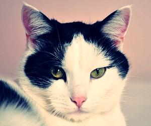 Nama Untuk Kucing Betina Dan Jantan Lucu Dan Popular