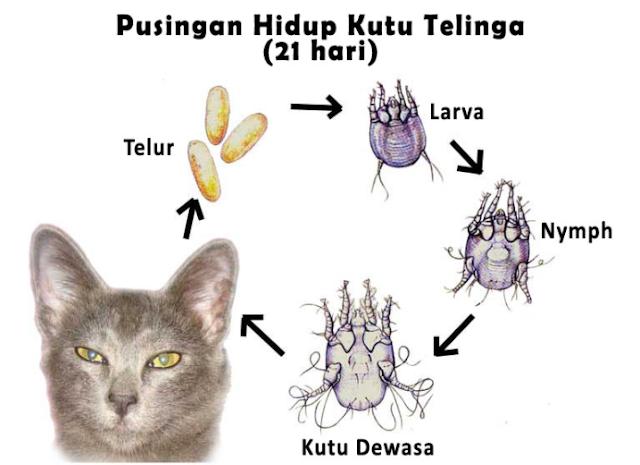 Punca Kutu Kucing, Jenis Dan Cara Menghilangkanny