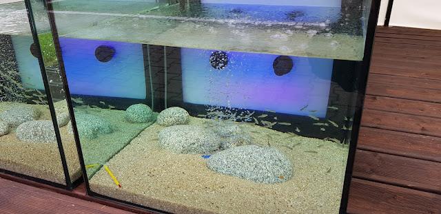Fish SPA Pedicure - Garra Rufa Nowa huta