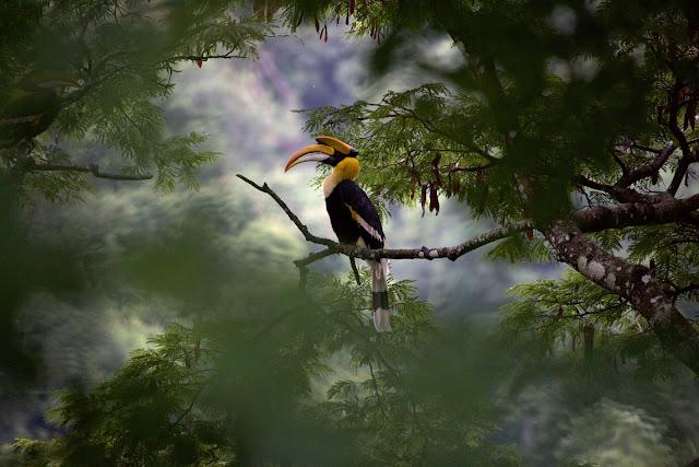 oiseau installé sur une branche au milieu d'une forêt