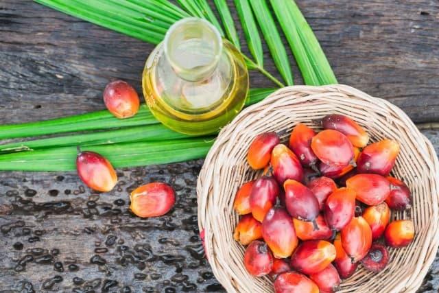 Palm oil là gì ? Tác dụng và mức độ an toàn