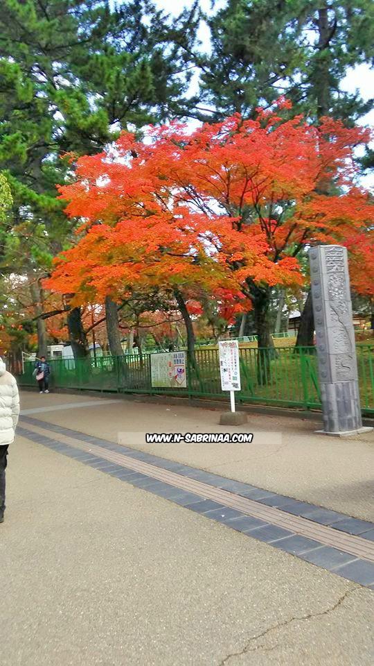 pemandangan indah musim luruh di Nara Jepun