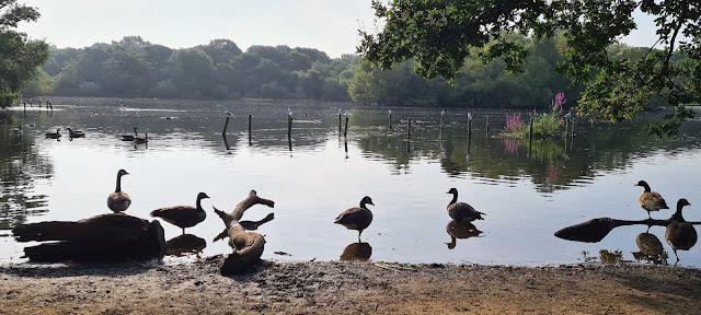 A peaceful scene at Connaught Water, Eping Forest, with ducks