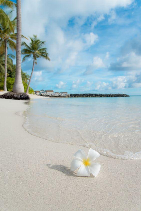 Tropical Beach In The Maldives Canvas