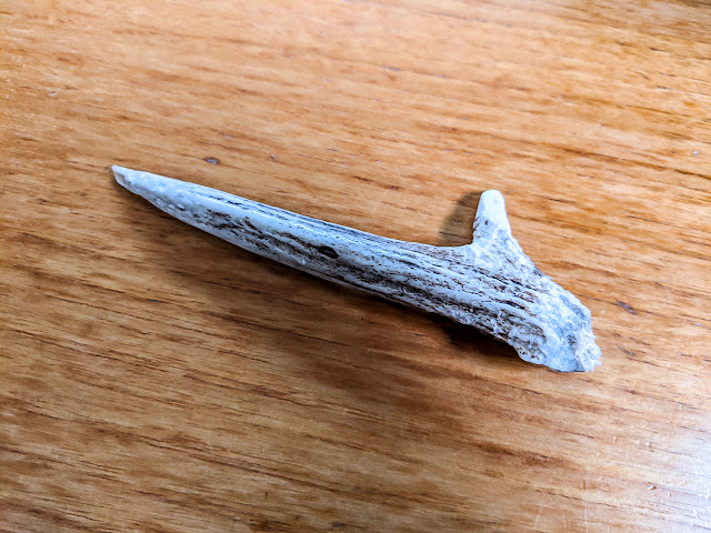 Photo of the antler that did the damage