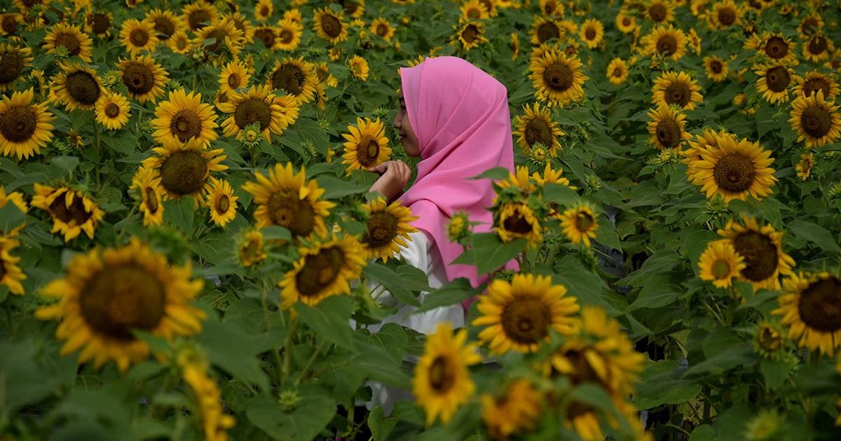 paling bagus 24 gambar taman bunga untuk mewarnai