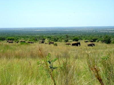 Pilanesberg Game Reserve, South Africa, landscape, elephants