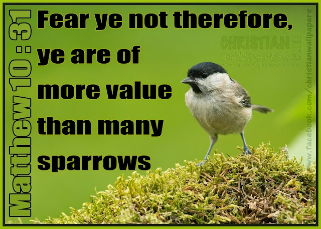 You are more value than many sparrows