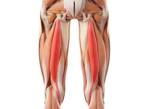 العضلات المستهدفة في تمرين السكوات