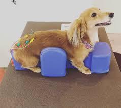 diminuindo escaras em cães paralisados