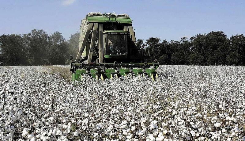 Ομοσπονδία Αγροτικών Συλλόγων Ν. Έβρου: Απαράδεκτα χαμηλές οι τιμές στο βαμβάκι