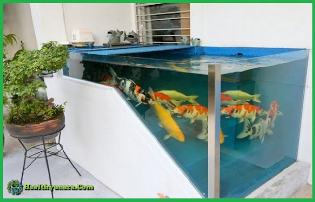 5 Minimalist Fish Pond Design Suitable For Simple House