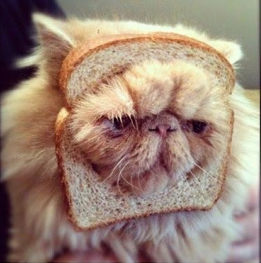 Funny Inbred Cat Picture