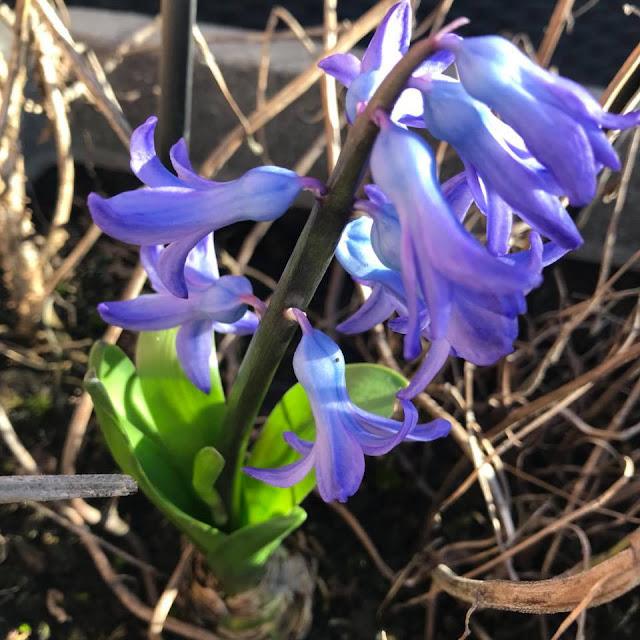 flowers-in-bloom