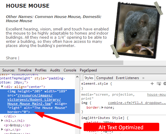 Descriptive Alt Tags - house mouse