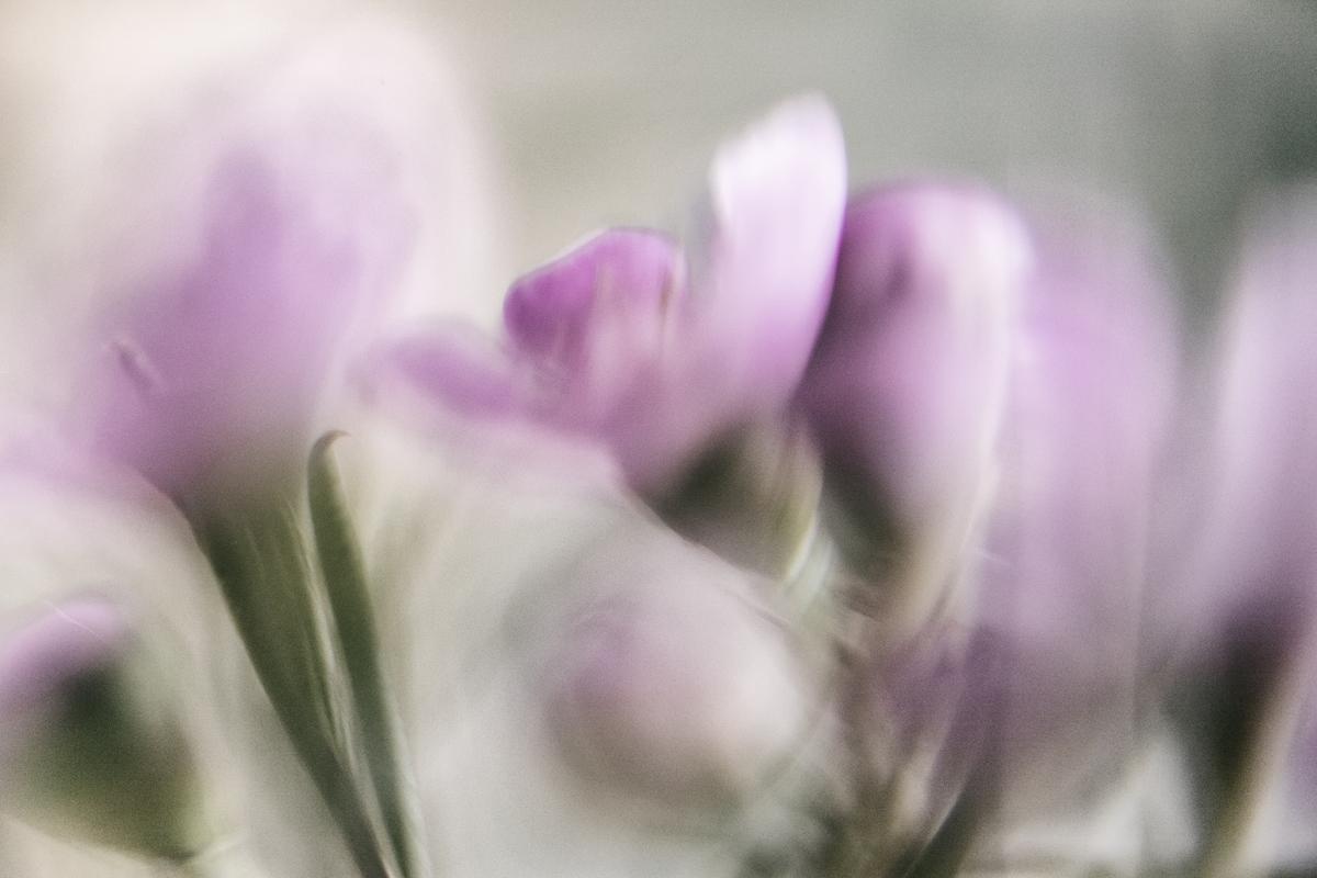 Photoart, taidevalokuva, valokuvaus, valokuvaaja, Frida Steiner, Visualaddict, visualaddictfrida, macrolensing, makroilu, makrokuva, makro, valokuva, taide, photographerlife, photographer, suomi, espoo, finland, flower, flowerart