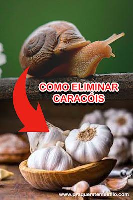 Use alho para eliminar os caracóis