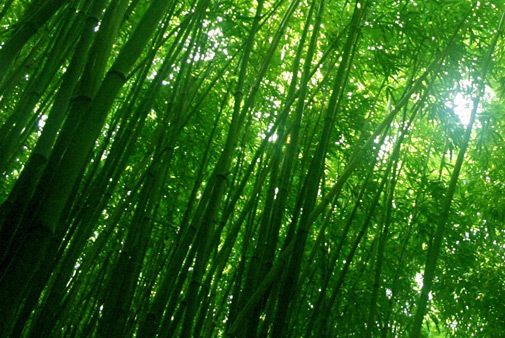 Rich Farm: Why Bamboo Is Now The Huge Cash Earner You Want To Try
