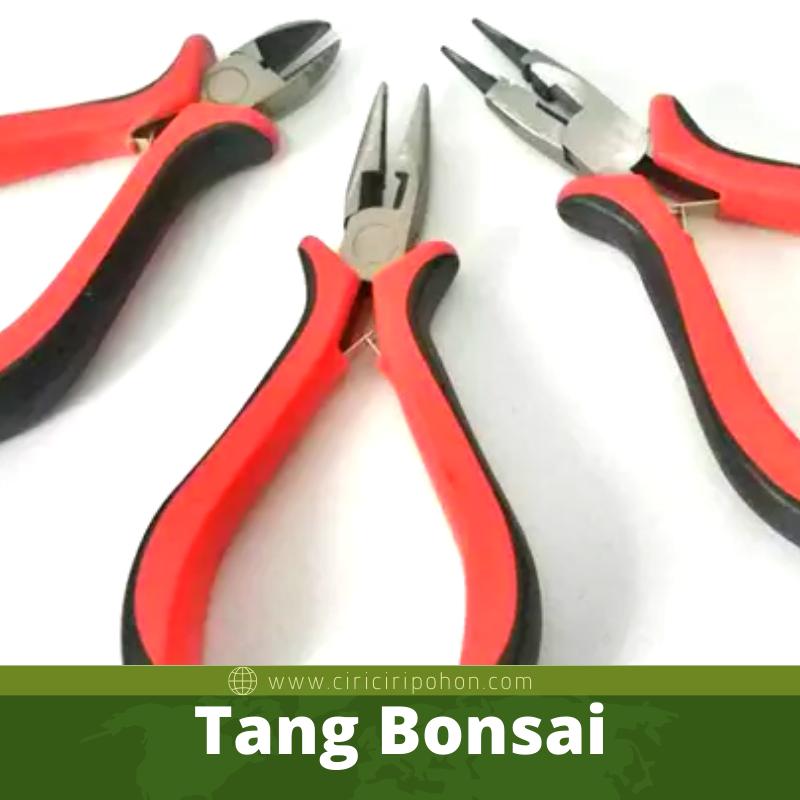 Tang Bonsai
