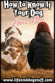 How to Tell if Your Dog Loves and Trusts You