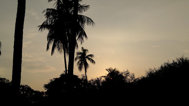 An Afternoon Sunset        Beauty | From'S Photography