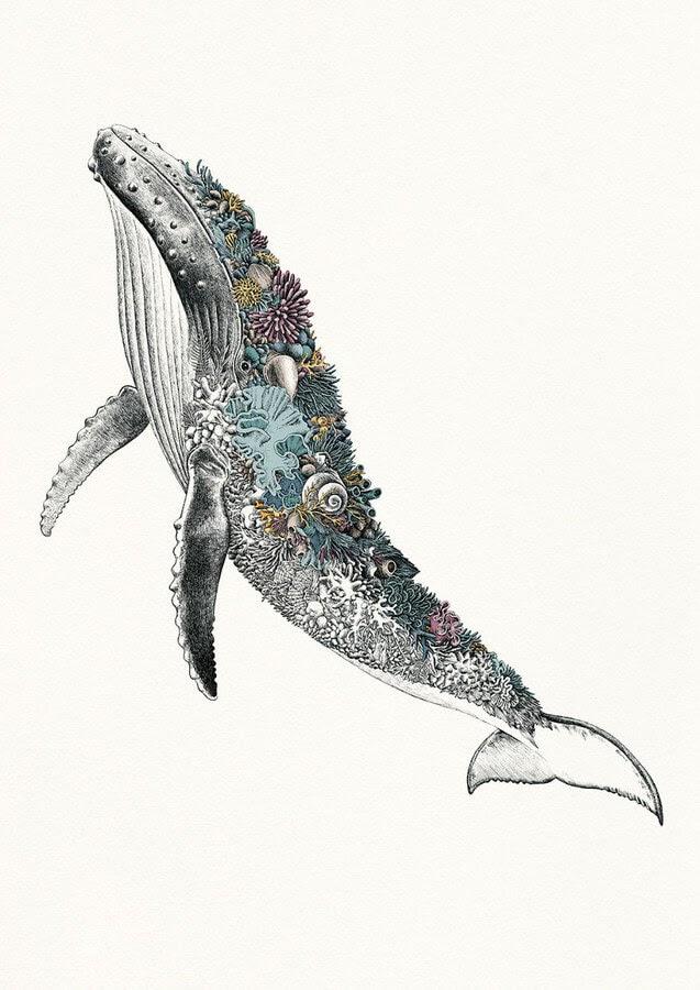 04-Humpback-Whale-Nathan-Ferlazzo-www-designstack-co