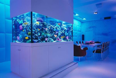 Using a Freshwater Aquarium to Decorate Your Home Using a Freshwater Aquarium to Decorate Your Home