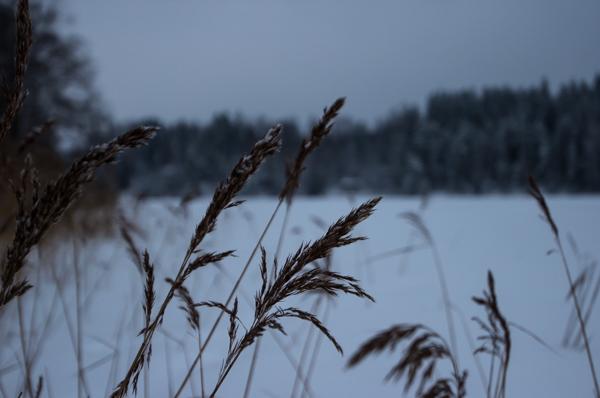 luonto talvella suomi nature winter finland