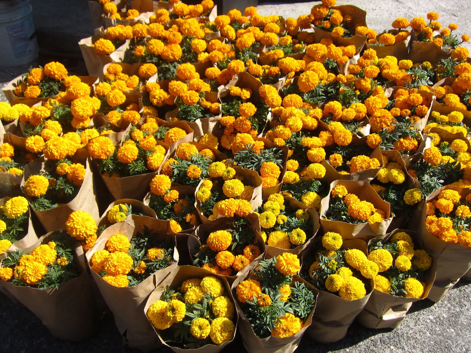 Mercadito de los Muertos - flor de cempasuchil