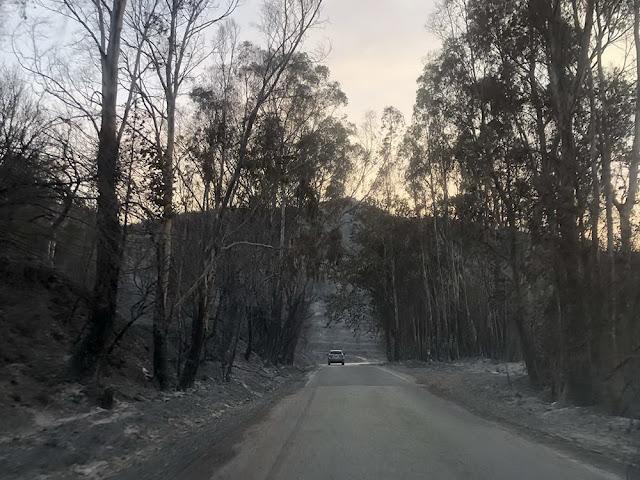 """""""Κρανίου τόπος"""" σε Μεσσηνία και Λακωνία από τις πυρκαγιές"""