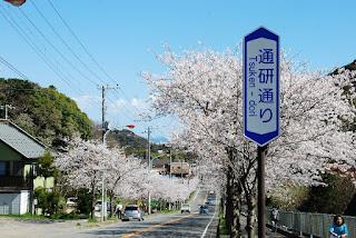 真っすぐに下る坂道の両脇に整列する満開の桜並木