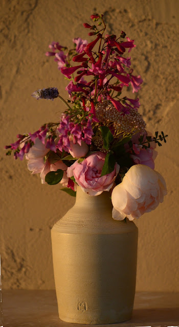 monday vase meme, small sunny garden, amy myers, desert garden, penstemon, rose, david austin, wollerton old hall, alnwick rose, ceramics, stoneware