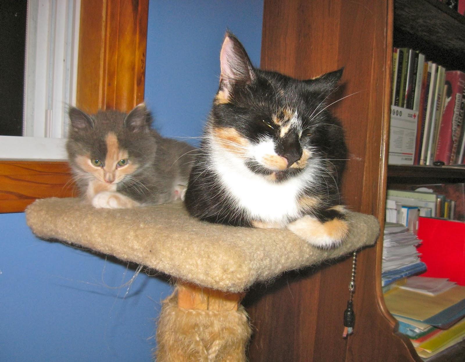 Miri S House Cat Amp Kitten Rescue January