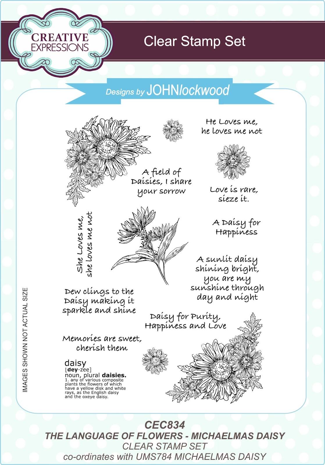 John Next Door The Language Of Flowersmichaelmas Daisy