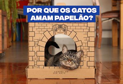 Por que gatos amam papelão?