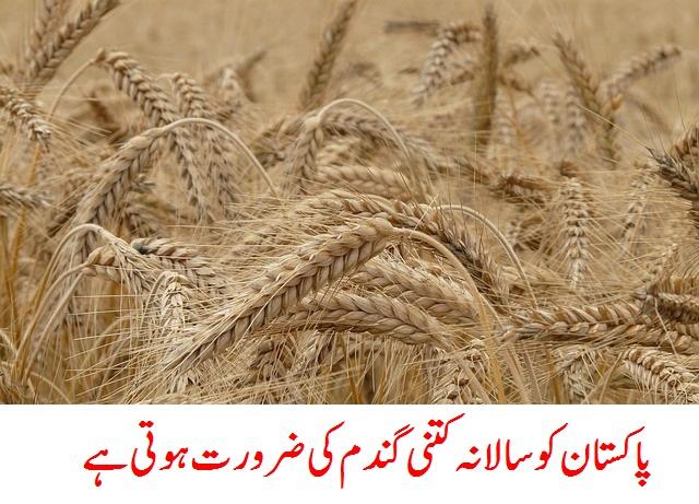 پاکستان کو سالانہ کتنی گندم کی ضرورت ہوتی ہے